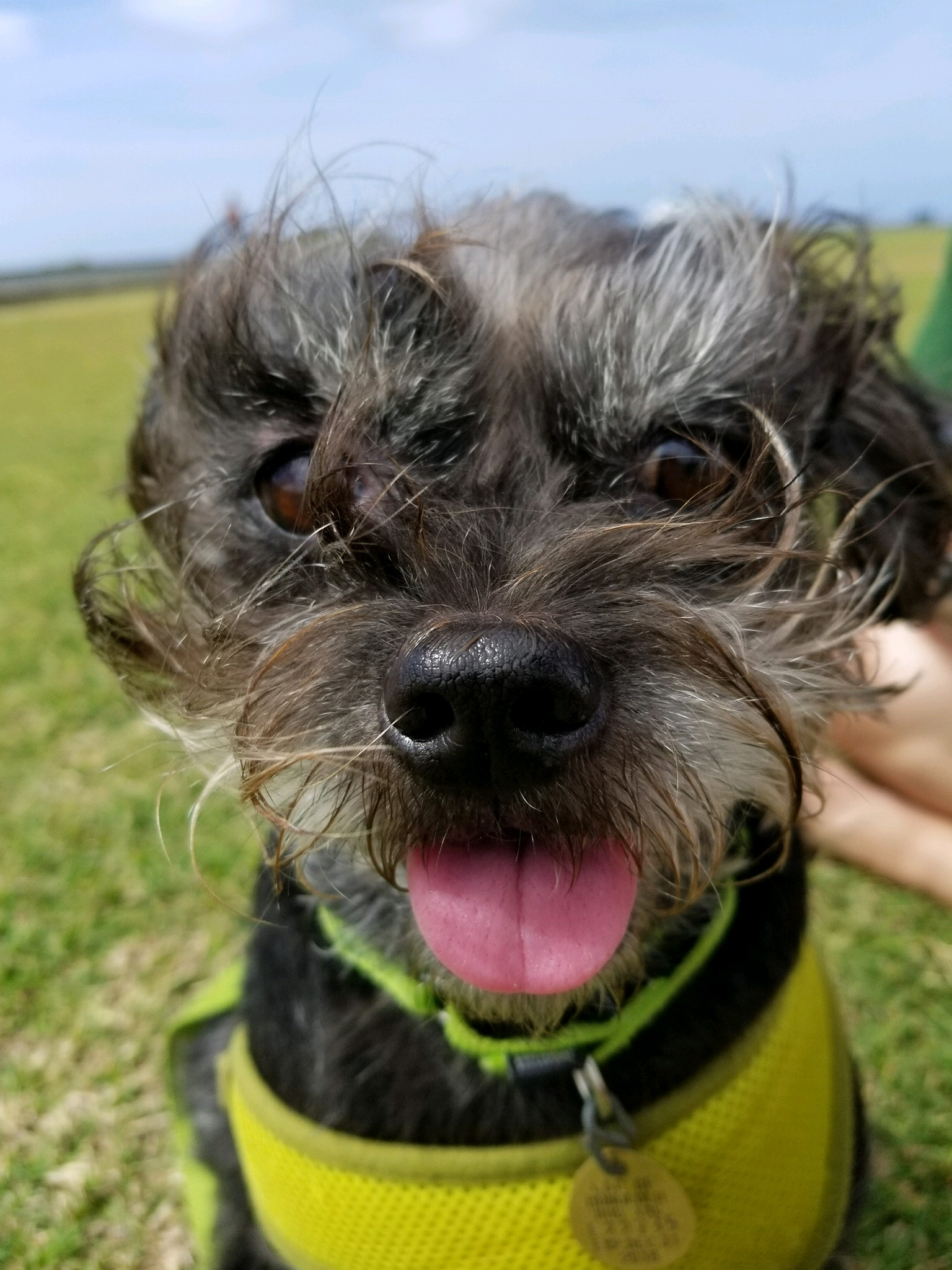 MUFFIN: 5 yr old Shih Tzu/Mini-Schnauzer mix. I'm from Kaimuki and my favorite thing to do is Explore the outdoors and chase the birds.
