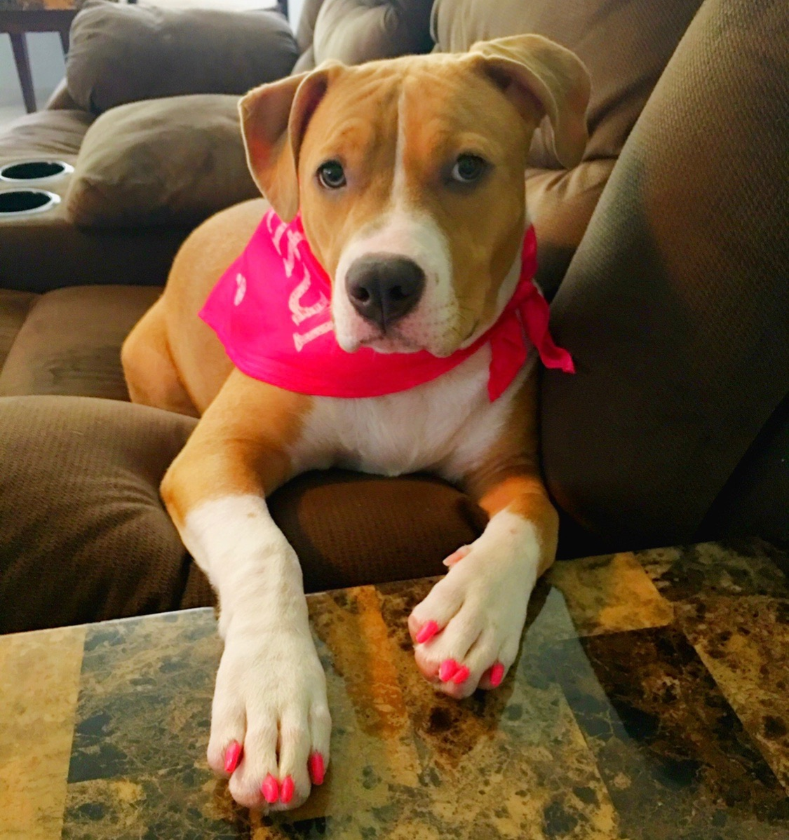 GRAYSON:  1 yr old Pitbull Terrier. I'm from Hawaii Kai. I love to swim in the ocean and spend time at the beach. (I think I'm part mermaid 🧜♀️)