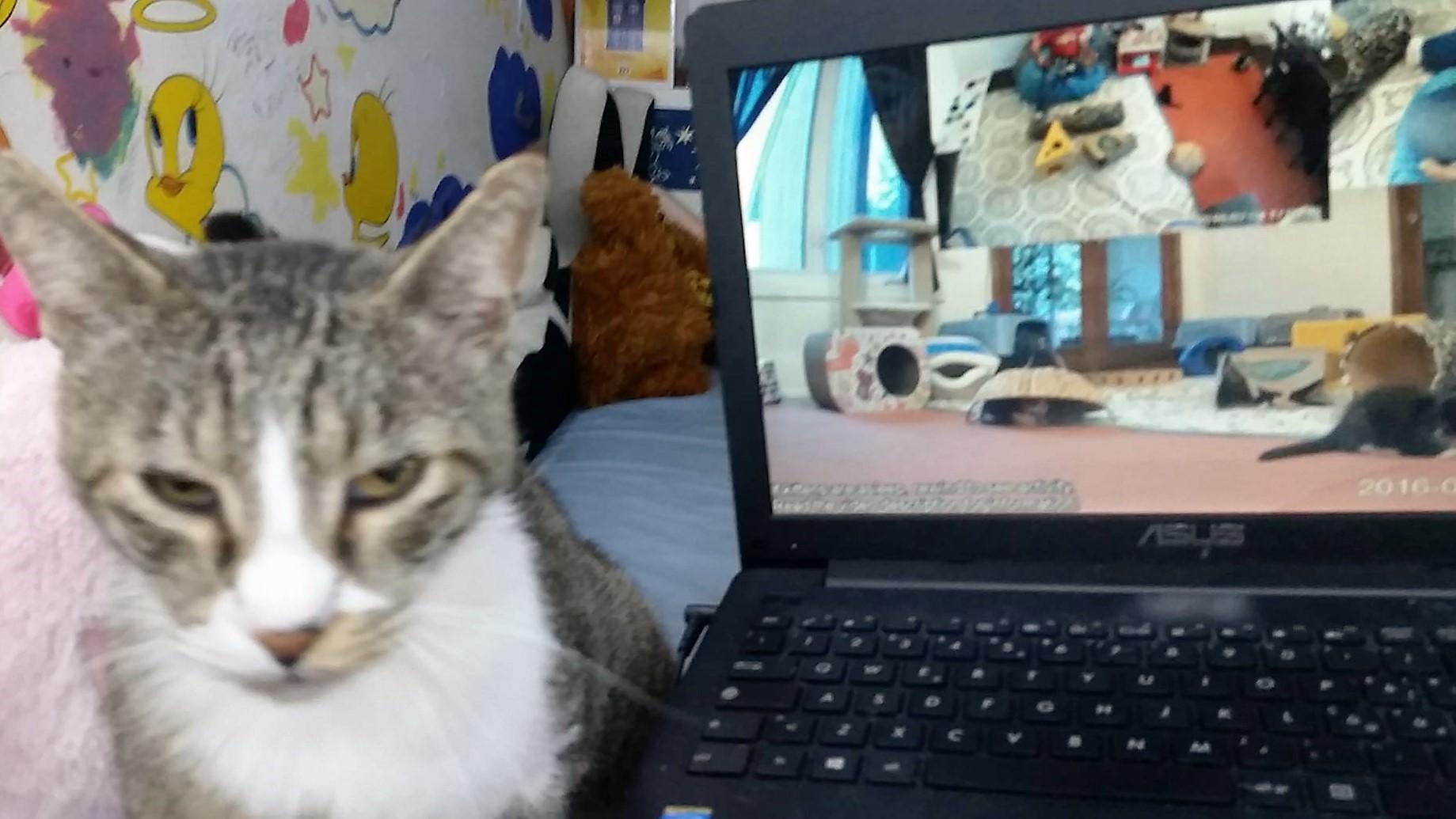 Robyn's Cat Rory Unamused