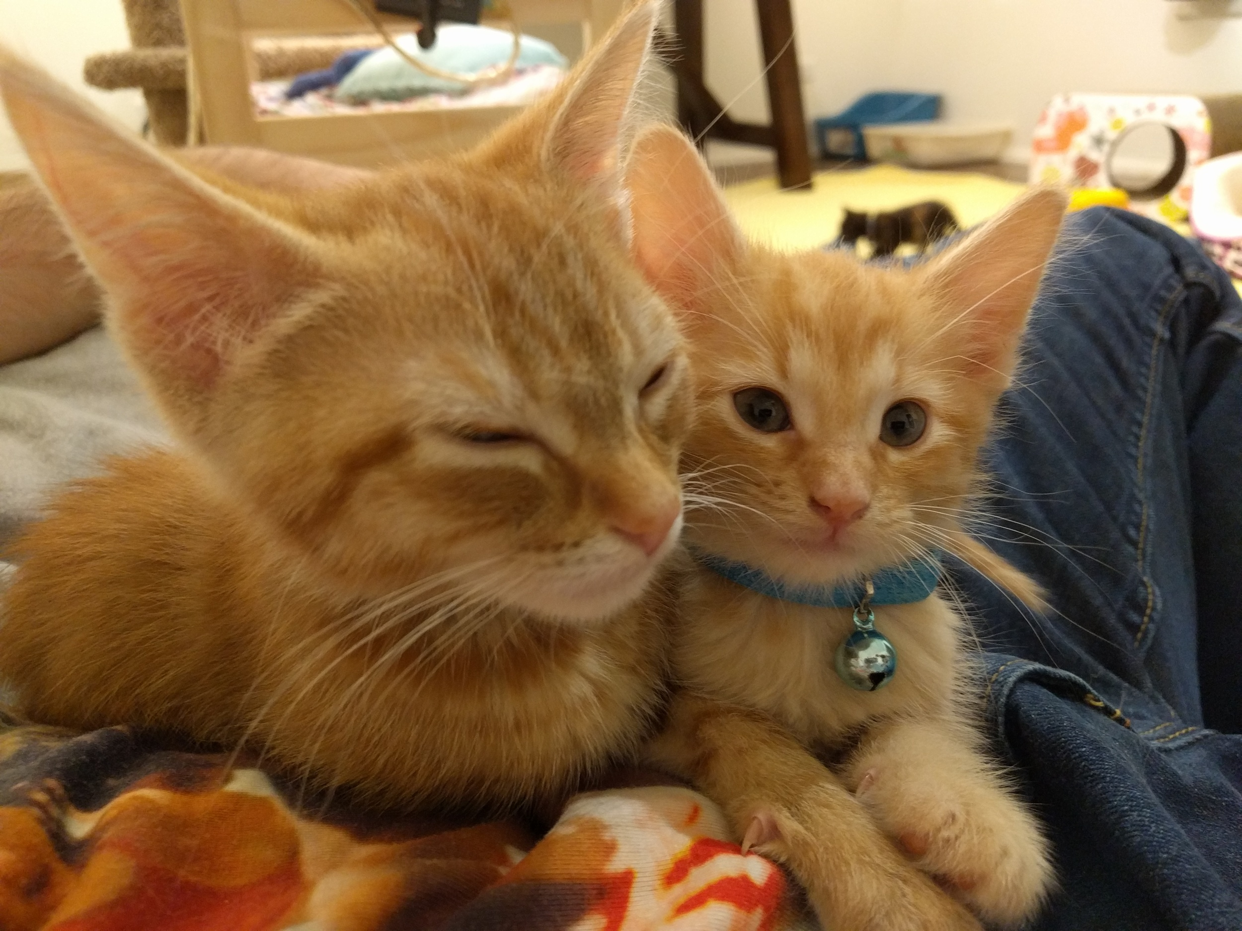 Nutmeg and Toffee.  #Bros4Life.