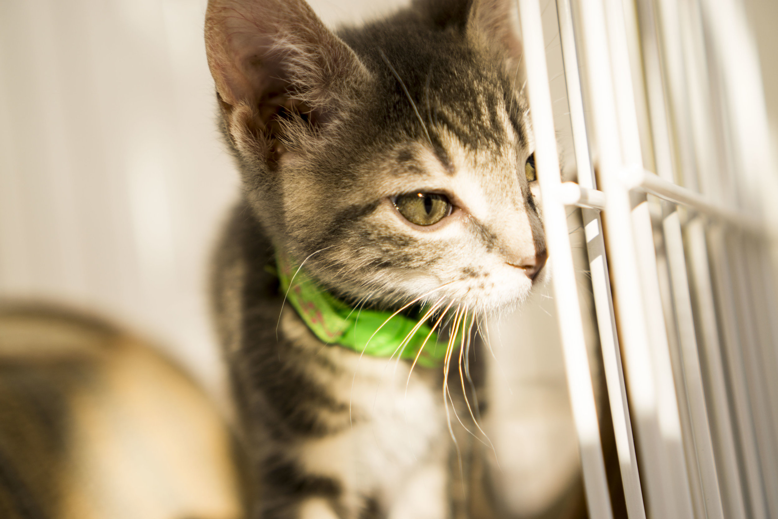 Stormy - Male - Green Collar with Pink Design