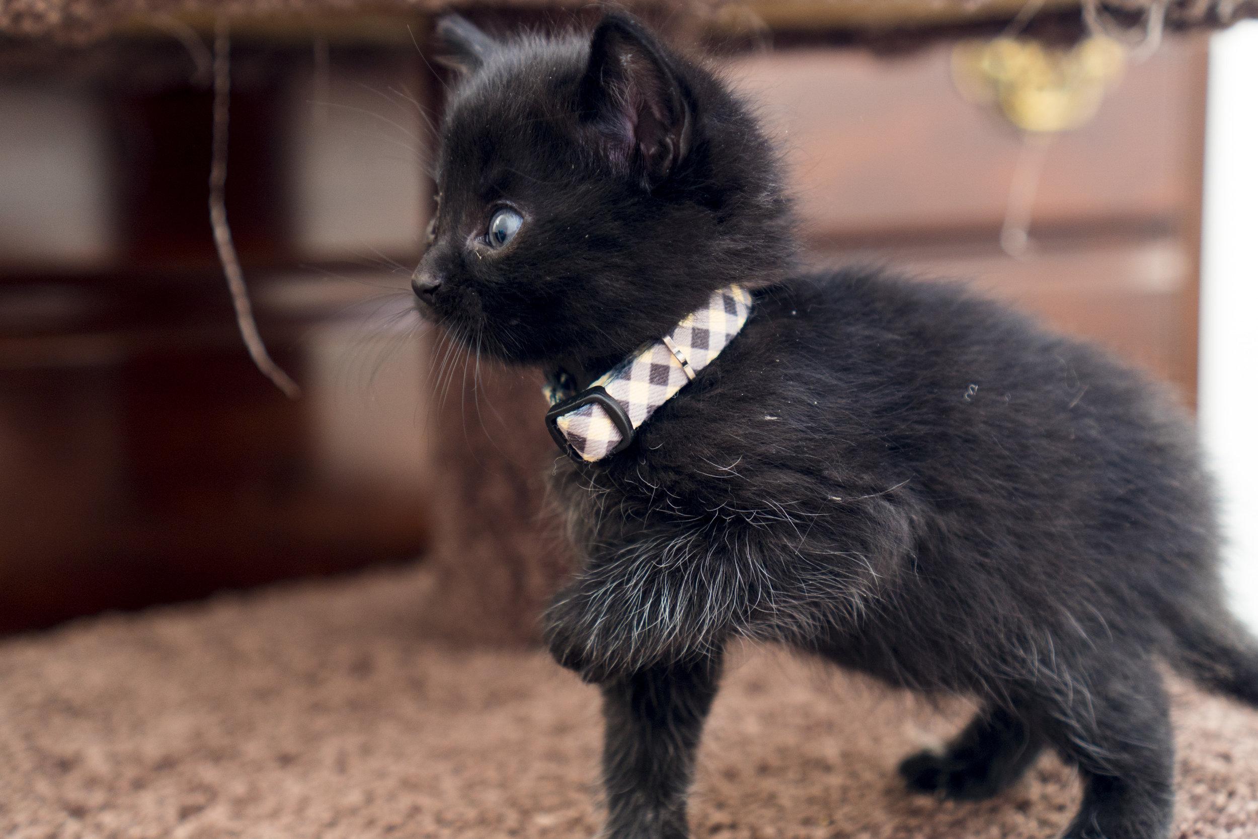 Flannel - Female - Plaid Collar