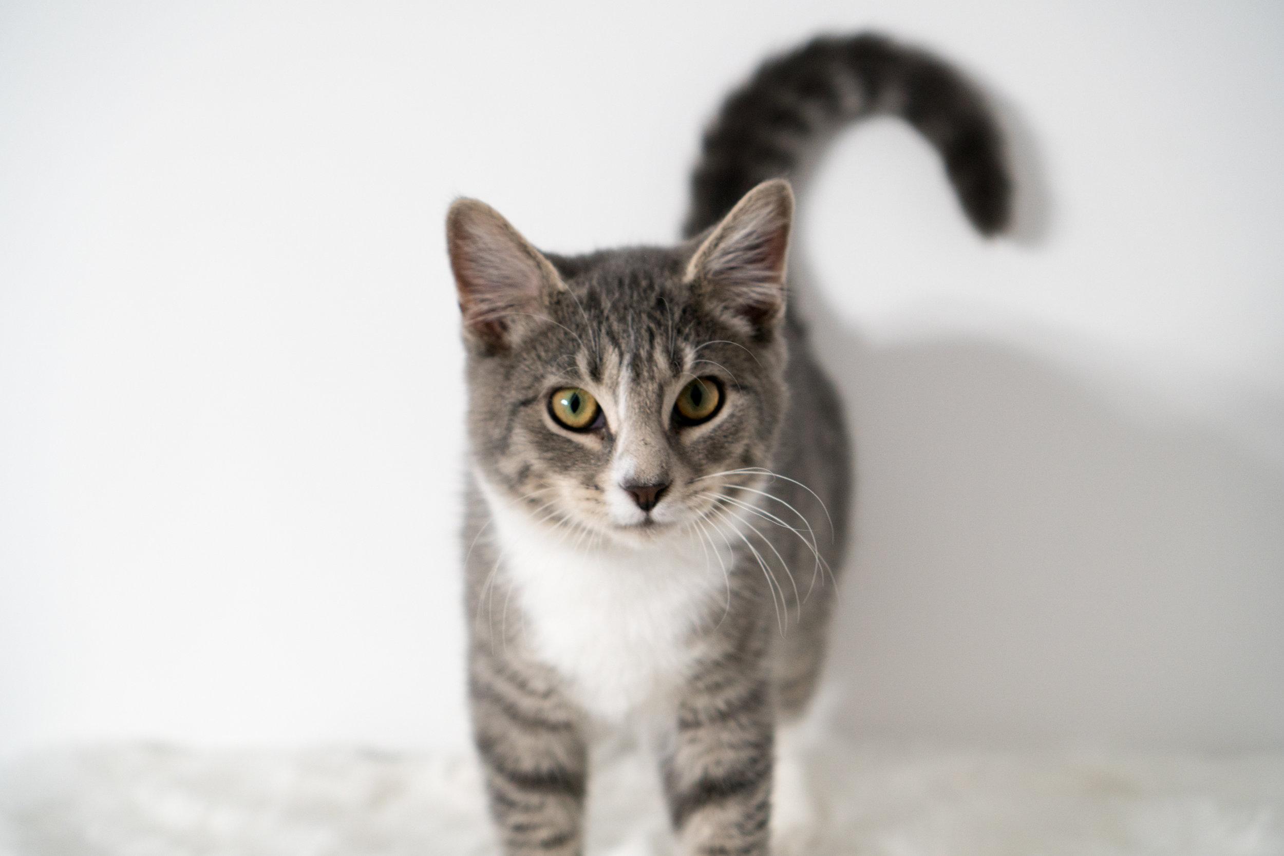 Filbert - Male - 6 months