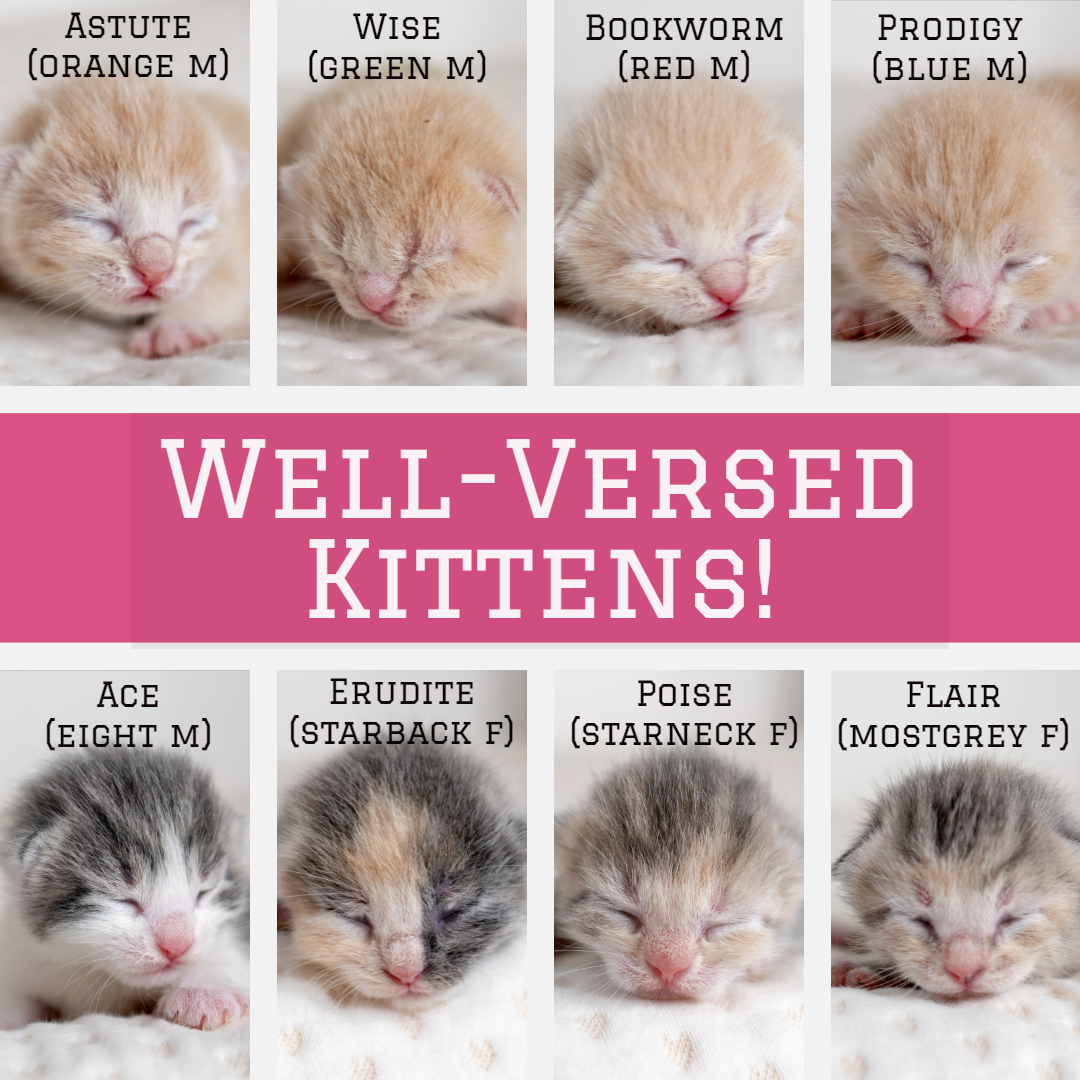 well-versed_kittens (1).jpg