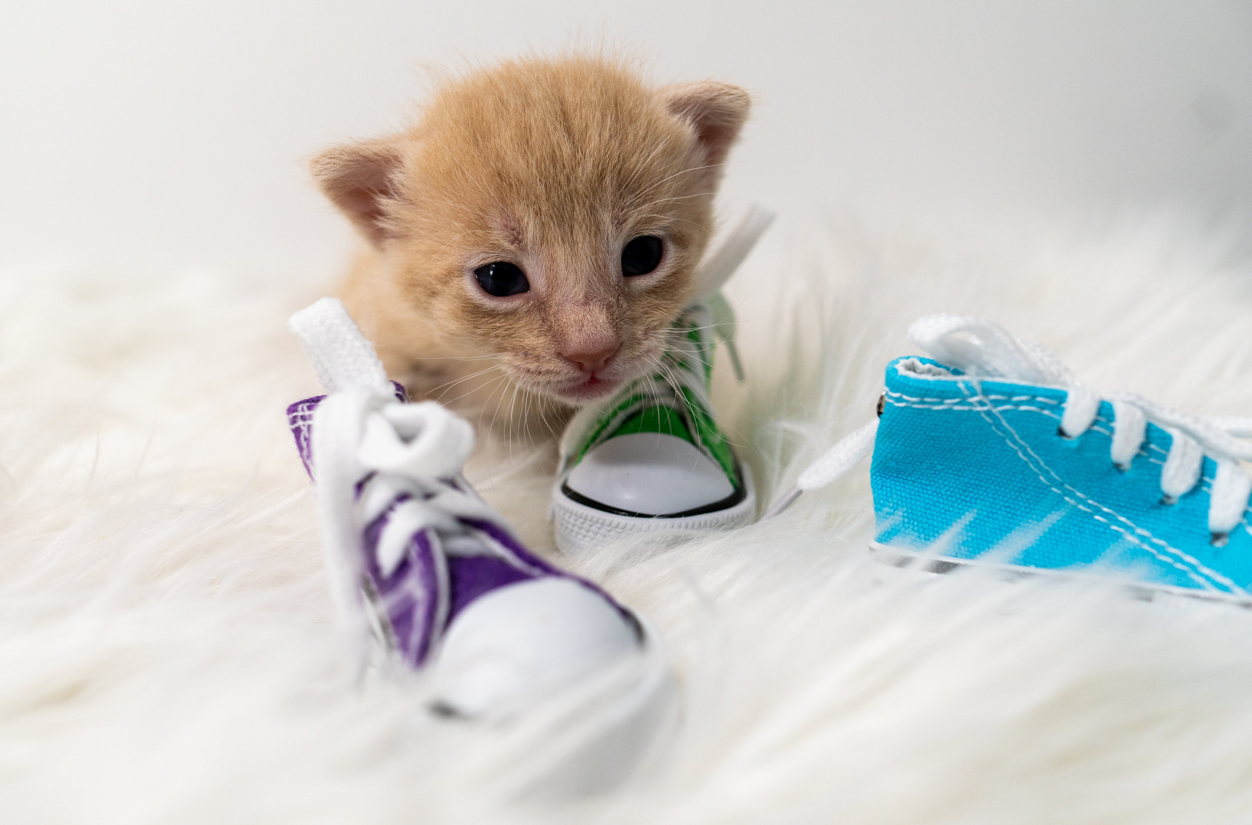 Updates on the Solemates and TnT! — Kitten Academy