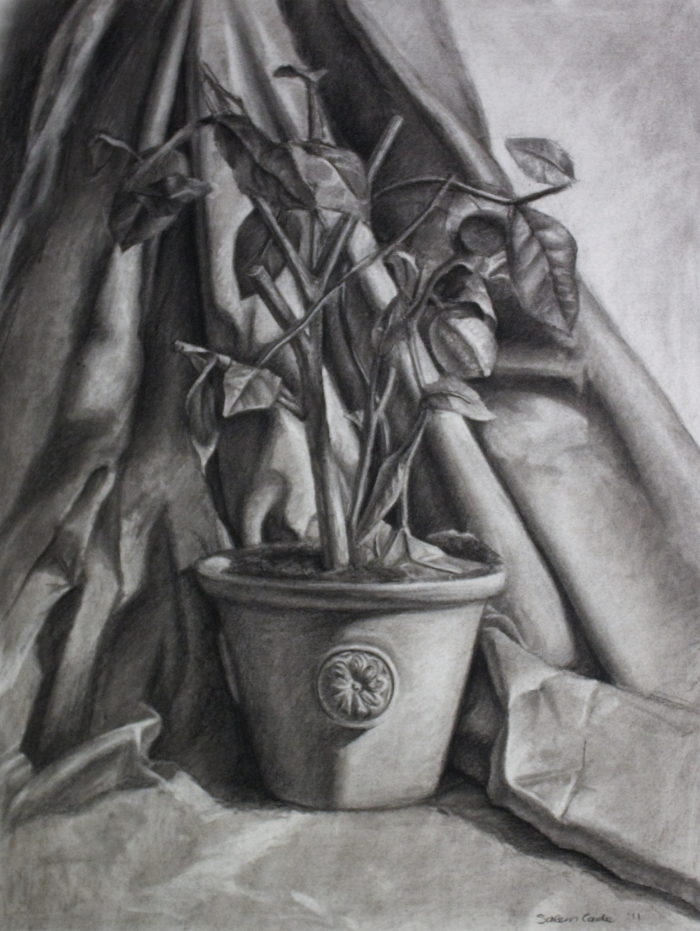 Lemon Tree | Charcoal