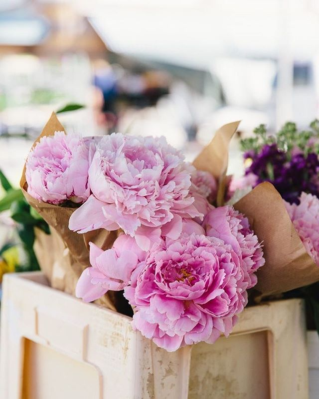 Buy your self flowers. You deserve it. My favorite flowers are #peonies I have to have them at least once a month. What's your favorite flowers? #positivethoughts There is nothing stronger in the world than gentleness. Be gentle to your self this week. Happy Monday, my loves. Wink! #gentleness #bekindtoyourself