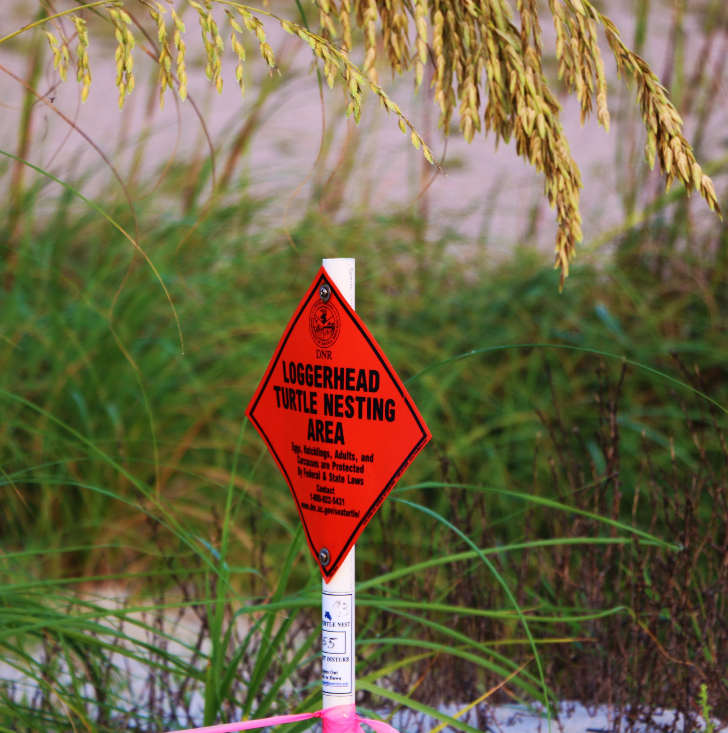 Sea Turtle Nesting Sign