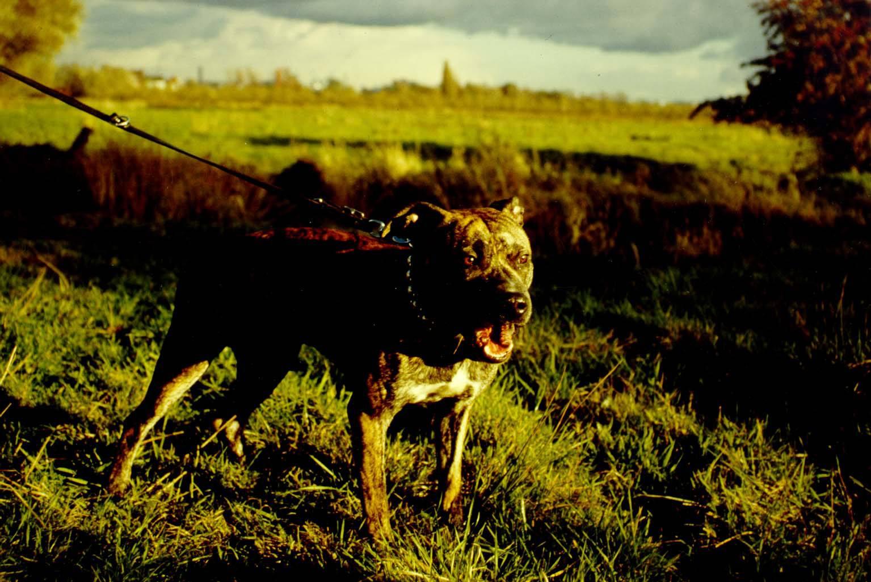 HUNDE AUS SAMT UND STAHL /DOGS OF VELVET AND STEEL
