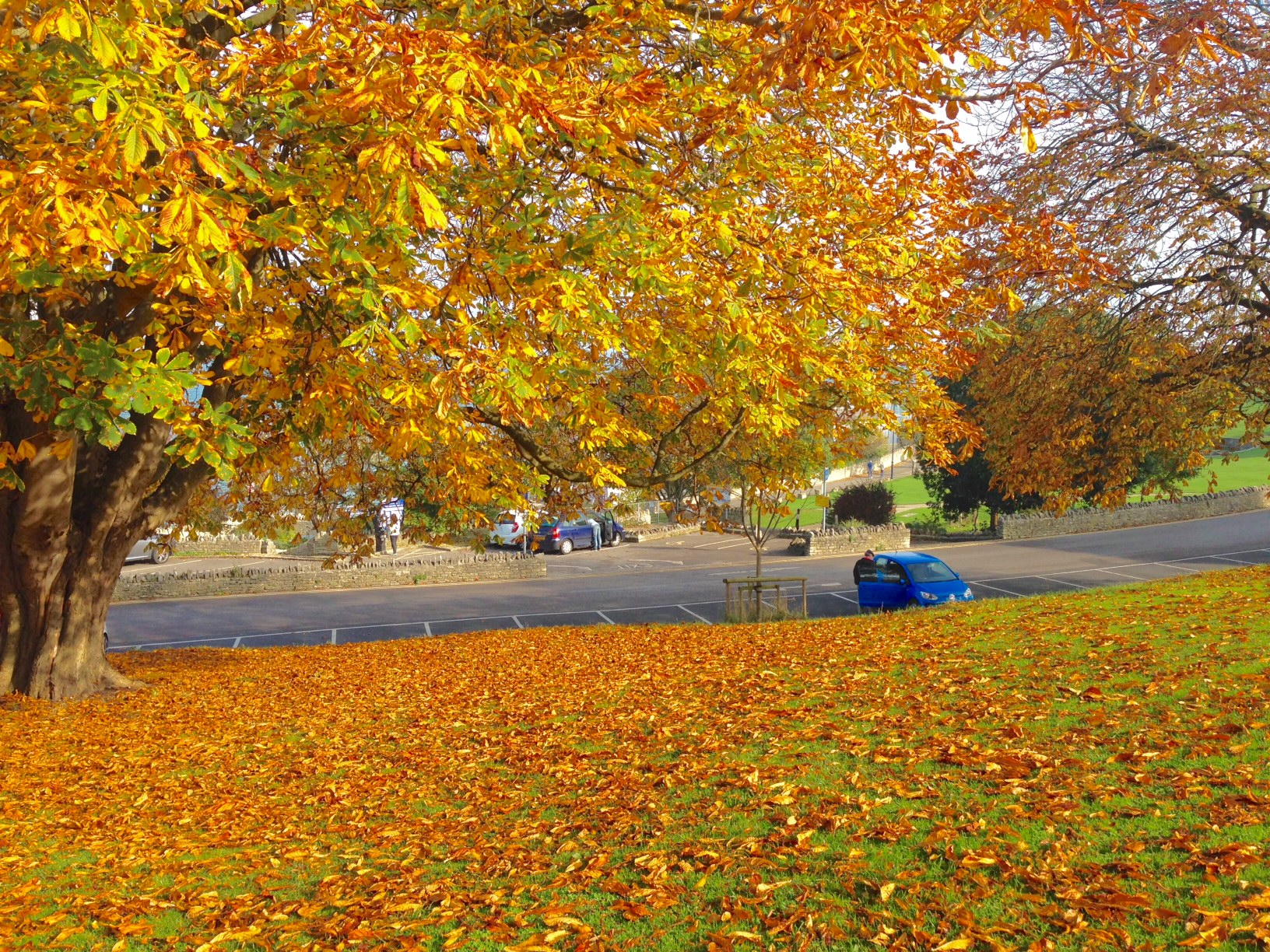 Autumn leaves back home in Swanage.