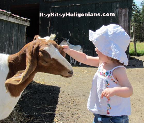 Hatfield Farms Petting Zoo