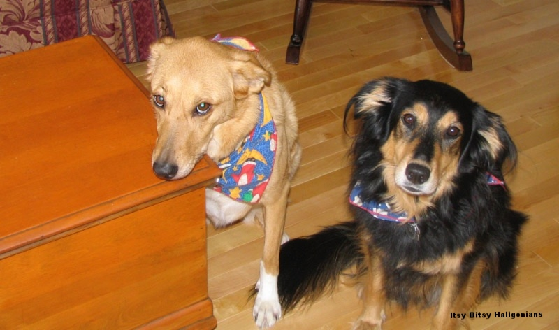 My late, great furbabies...and you better believe I had a treat in my hand to get them to sit still for this picture