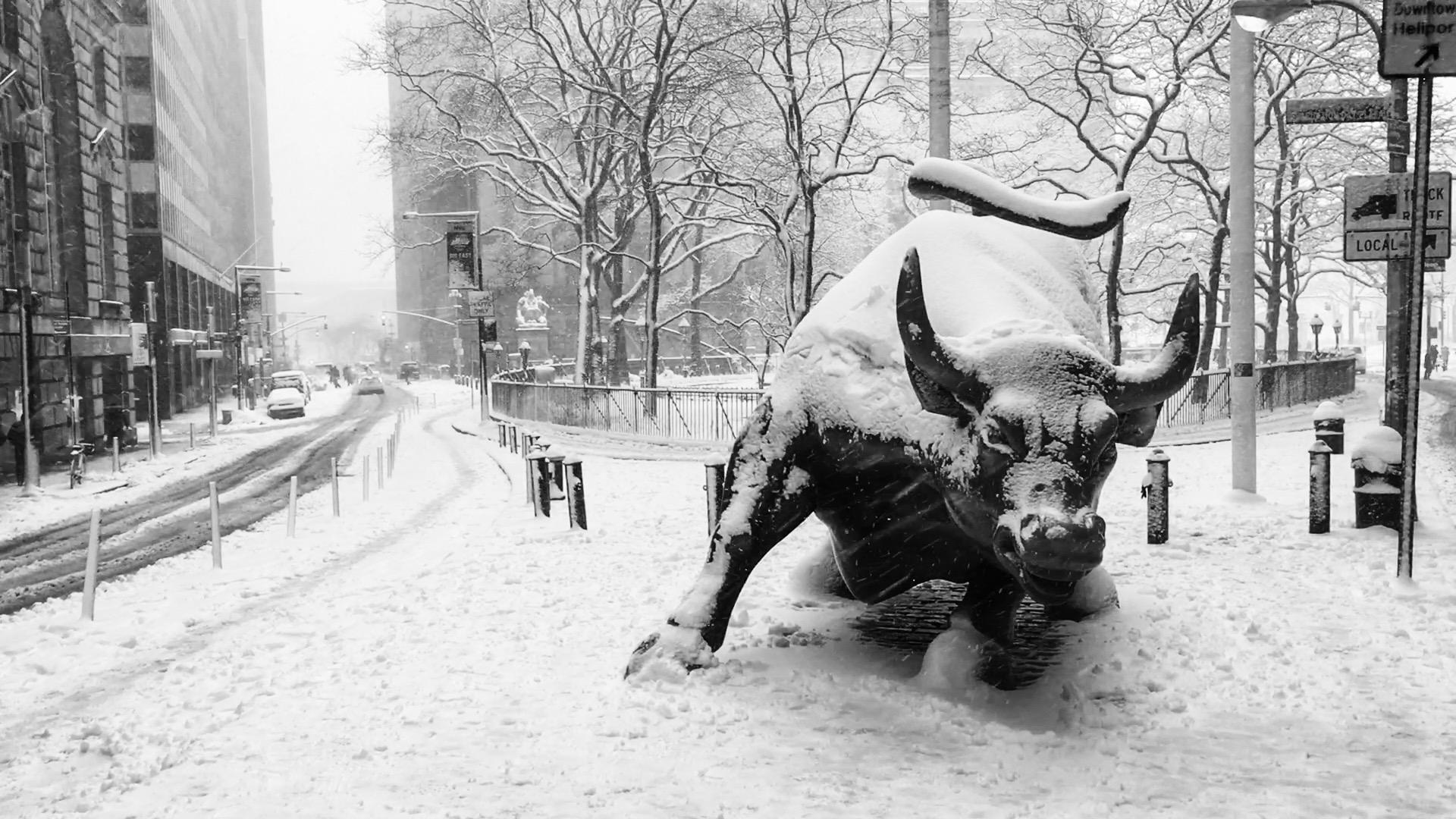 Bull on Bowling Green. Photo by Alberto Zamora.
