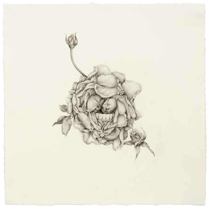 """""""A Rose has Teeth"""" pencil, colored pencil on paper, 14"""" x 14"""", 2014"""