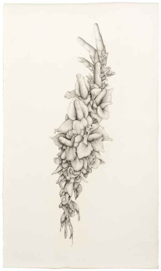 """Untitled (Gladiolas)"" pencil, colored pencil on paper, 27.75"" x 16.25"", 2014"