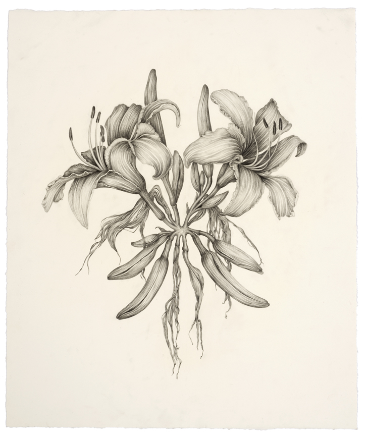 """""""Untitled ( Goth Lilies)"""" pencil, colored pencil on paper, 24"""" x 18.5"""", 2014"""