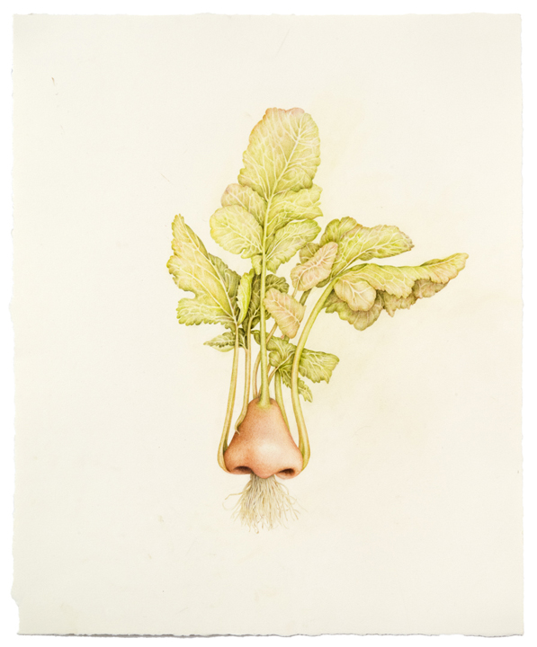 """""""Untitled (Kohlrabi Nose)"""" colored pencil on paper, 17"""" x 14"""", 2013"""
