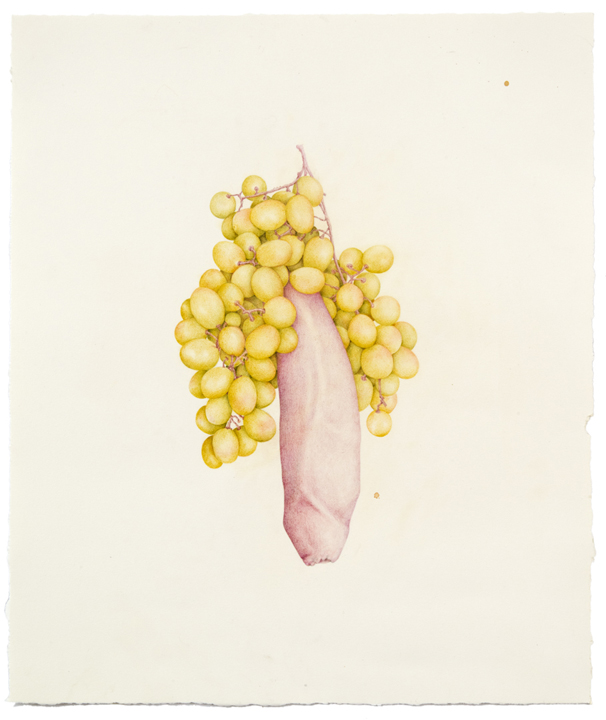 """""""Untitled (Dick Grapes)"""" colored pencil on paper, 18"""" x 15"""", 2013"""