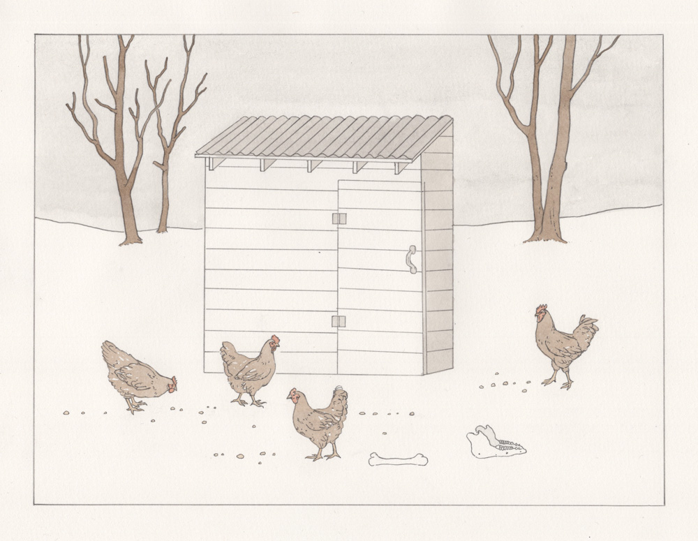 Nate_Antolik_Romeo_The-Chicken-House.jpg