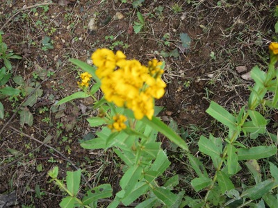 yellow natural dye.jpg