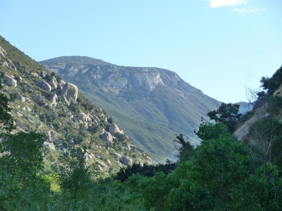 Preserving the Paradise Mountain Wildlife Corridor     Learn More