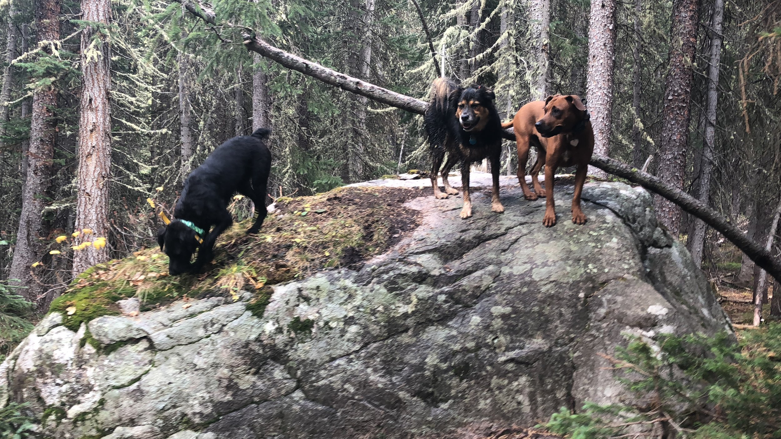 adventure hikes