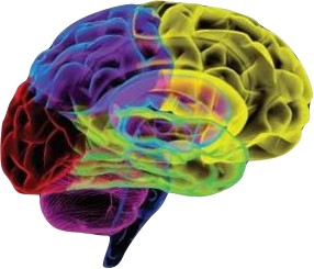 New Categories Create New Shelf Space in Your Brain