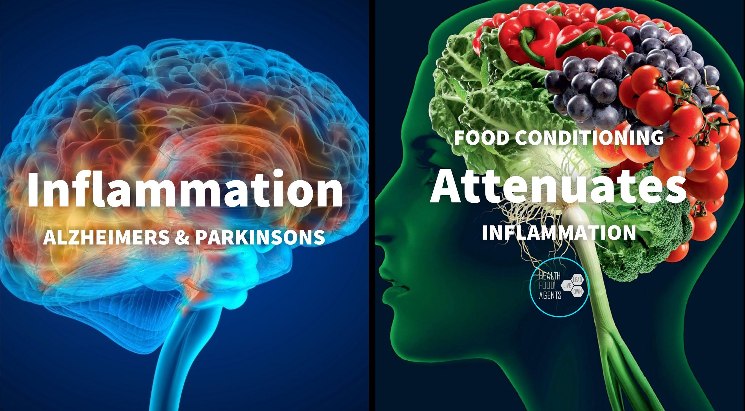 BRAIN inflammation.JPG