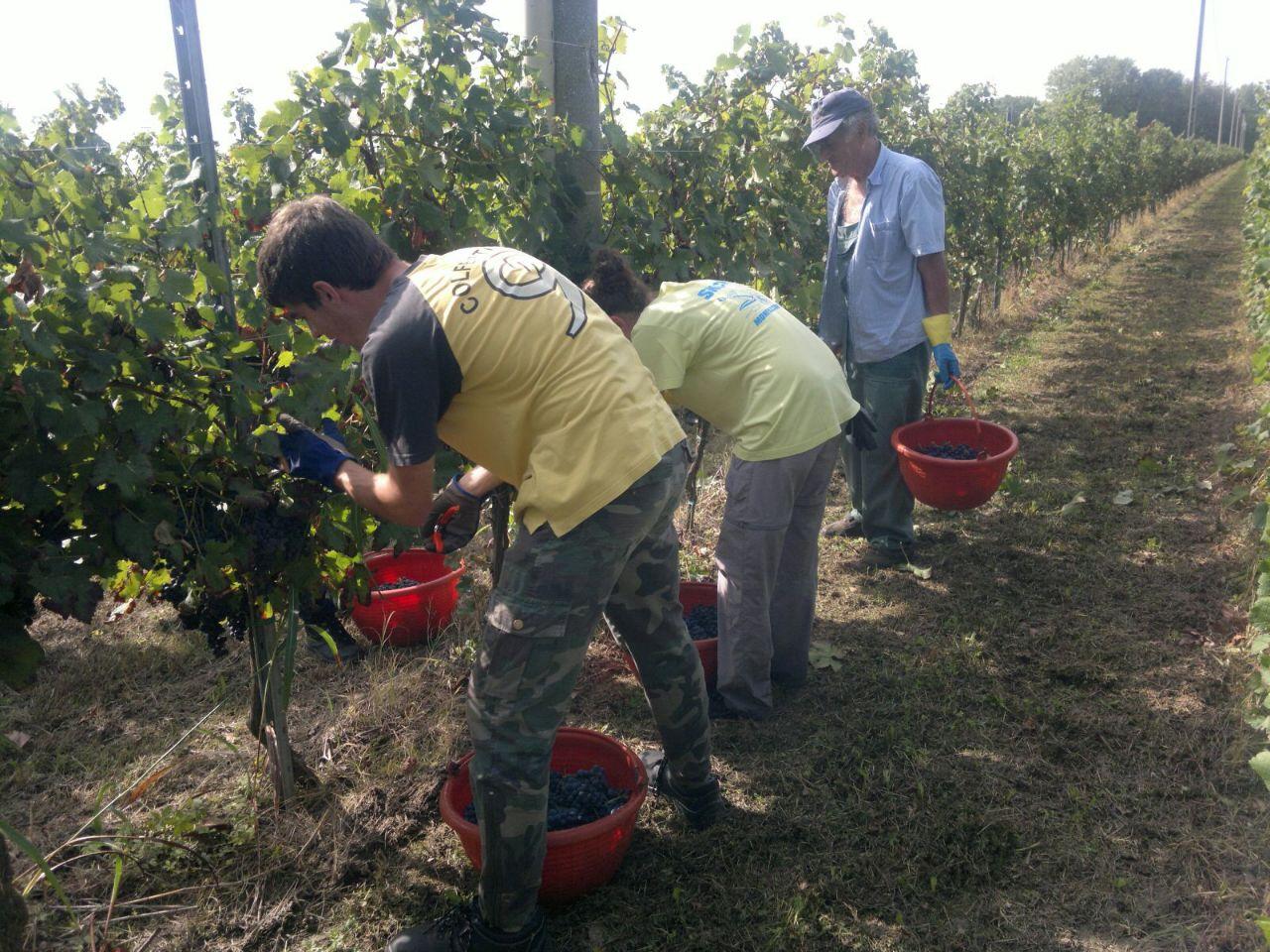 Harvest (4).jpg