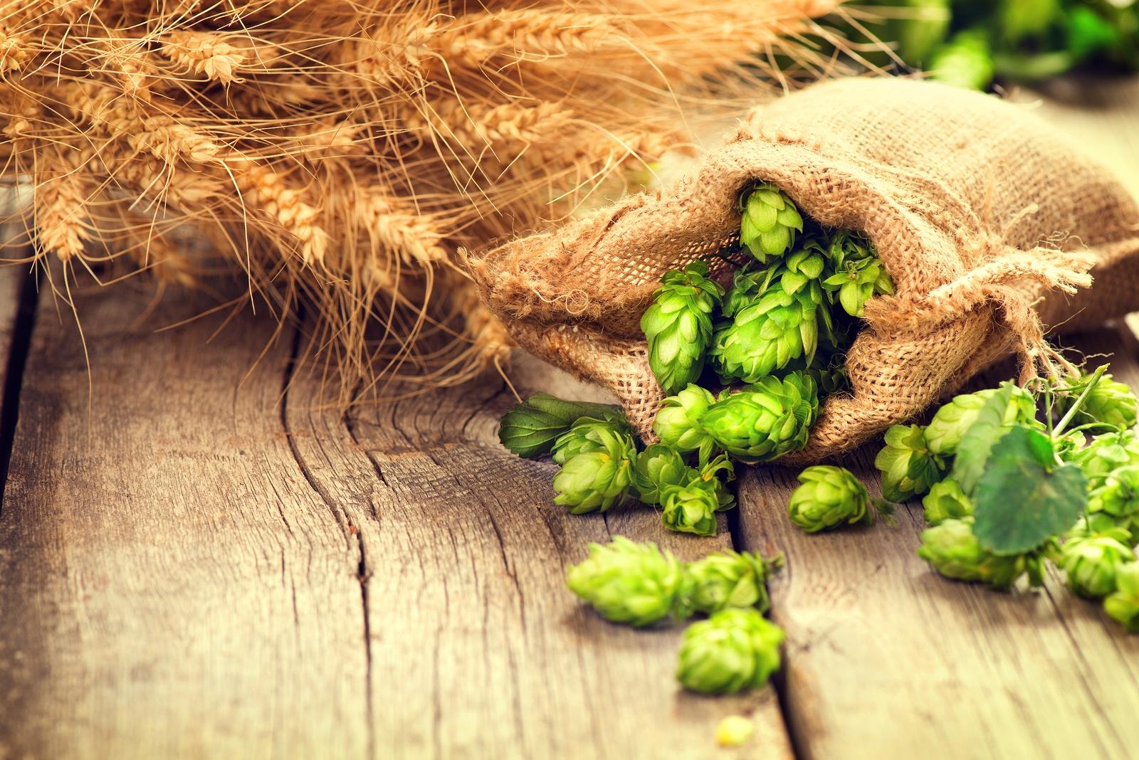 bigstock-Beer-brewing-ingredients-Hop.jpg