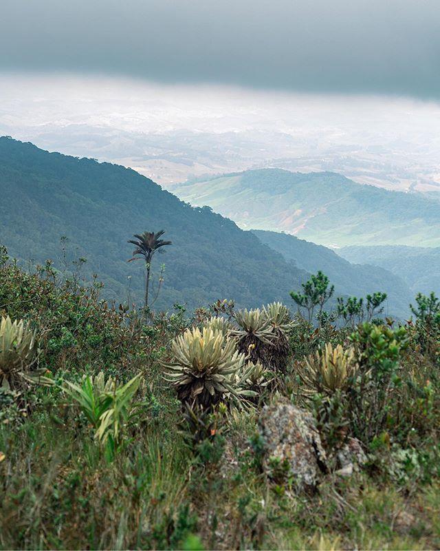 So high up in the mountains you can see forever ⛰ . . .  #colombiatravel #travelgrafia #visitcolombia #canon #canonusa #teamcanon #mycanonstory #paramos #frailejon #ecosystem #ecosistema #highaltitude  #colombiagrafia #colombiaessabrosura #realismomagico #colombiarealismomagico