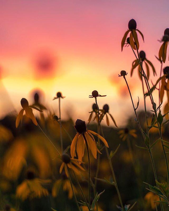 CLASSIC KENTUCKY 🔥 . . . #kentucky #onlyinkentucky #explorekentucky #travelky #kentuckygram #mycanonstory #kentuckyproud #sunset_love #outdoortones #sunset_pics #sunset_hub #sunset_ig
