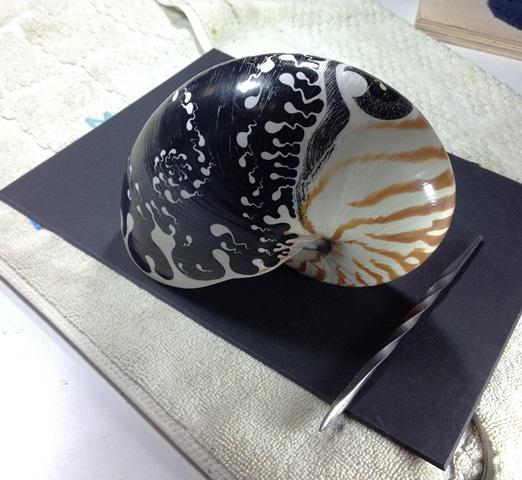 shell2b.jpg