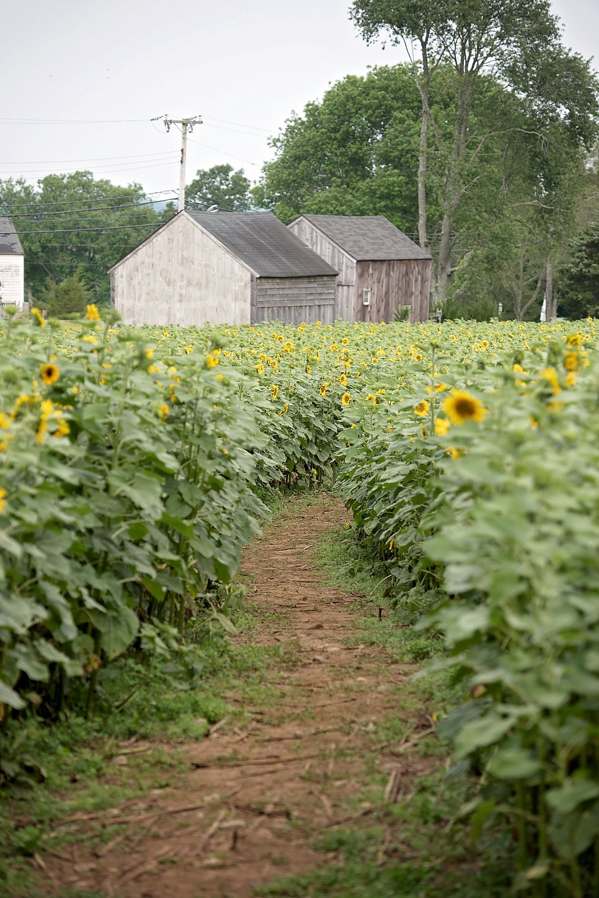 Buttonwood Farm Proposal_0194.jpg