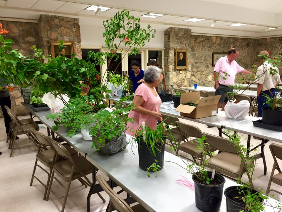 There's a broad variety of plants available at our fall plant swap, not just daylilies!