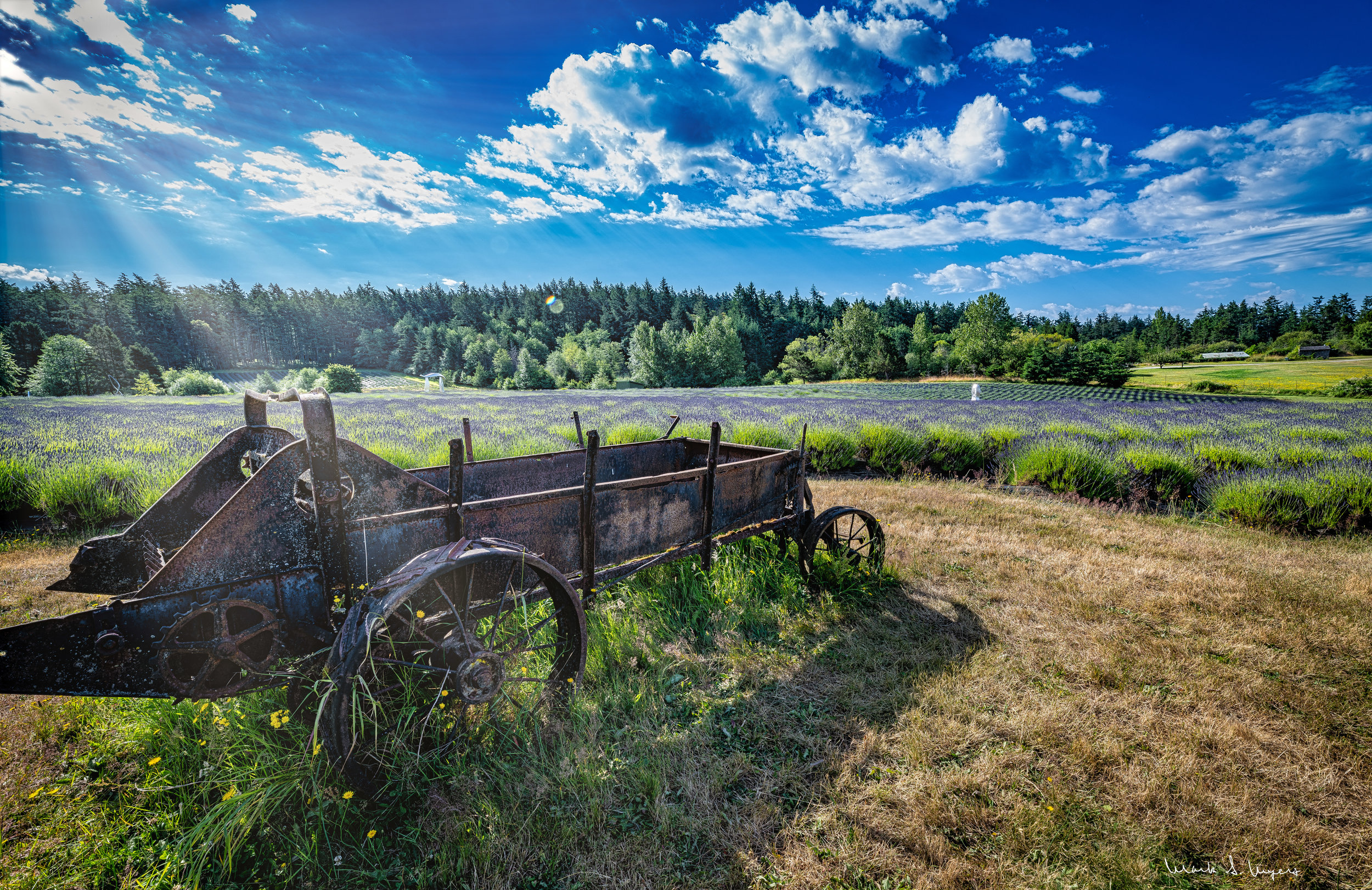 Lavender Landscape with Wagon-web-.jpg