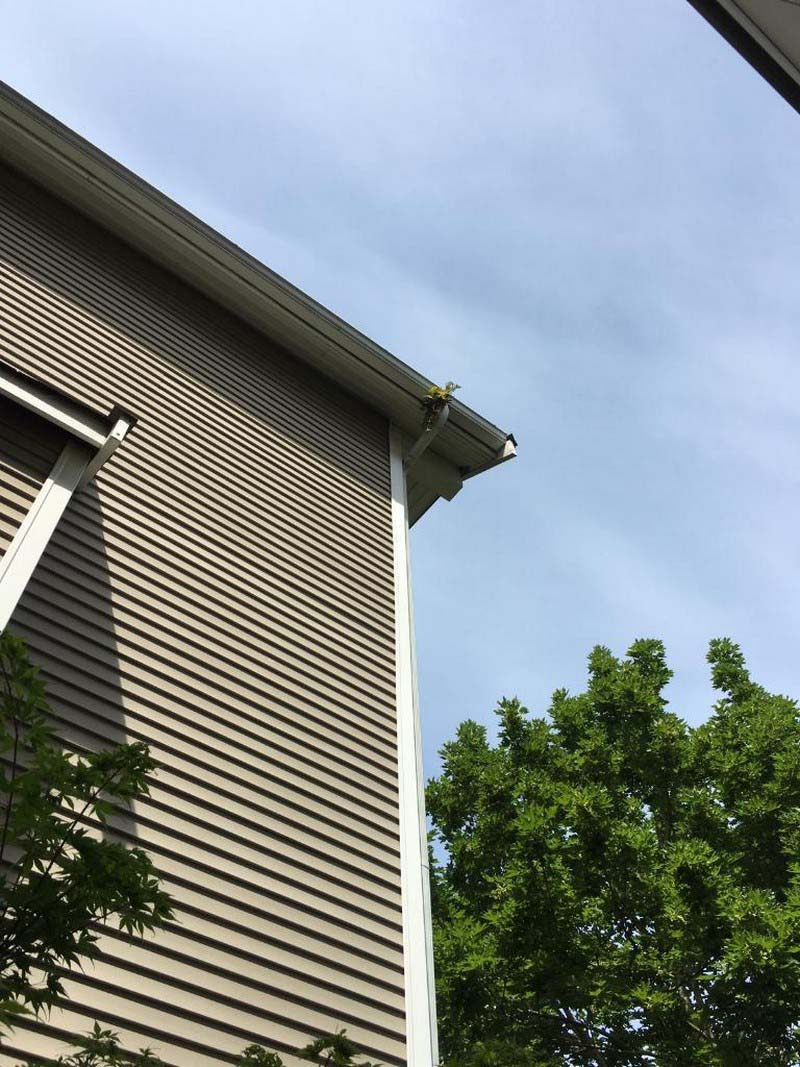 Gutter-Cleaners-Capitol-Hill-WA.jpg