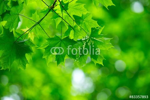 fotolia_83357893.jpg