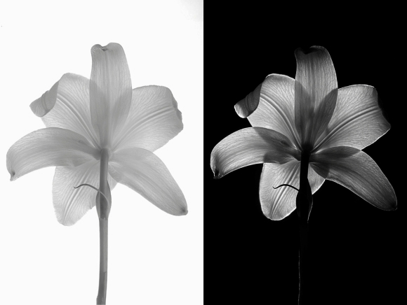 High key VS low-key techniques - Controlling the light on your backgrounds for perfect clean whites or mysterious blacks.