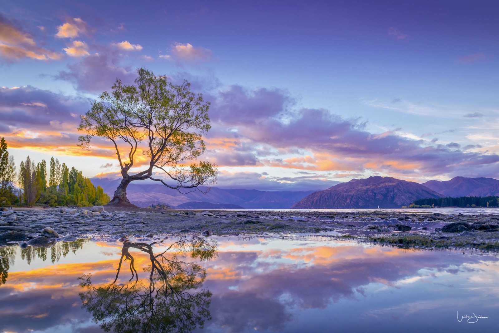 New Zealand | That Wanaka Tree.jpeg