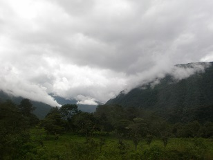Tropical Rainforest        Normal   0          (photo by Ryan Chenery)