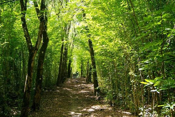 woodland trail.jpg