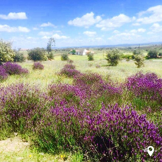 Almost looks like a painted picture 🎨  Beautiful countryside in Monsaraz, Portugal 🇵🇹 #frequentflyer #travel #travelphotography #travelapp #imabouts #traveltheworld #portugal #monsaraz #nature