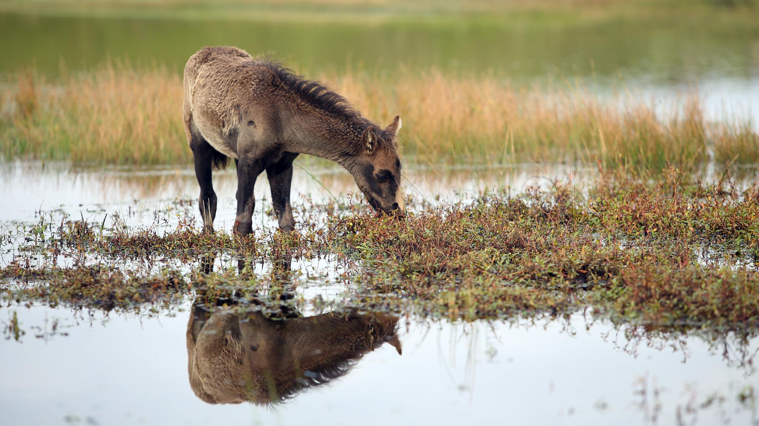horse in pond.jpg
