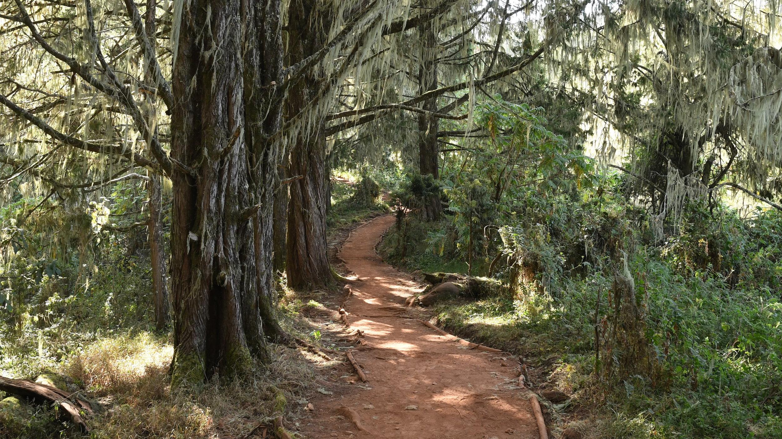 Day 3 / Podocarpus and Juniper Forest
