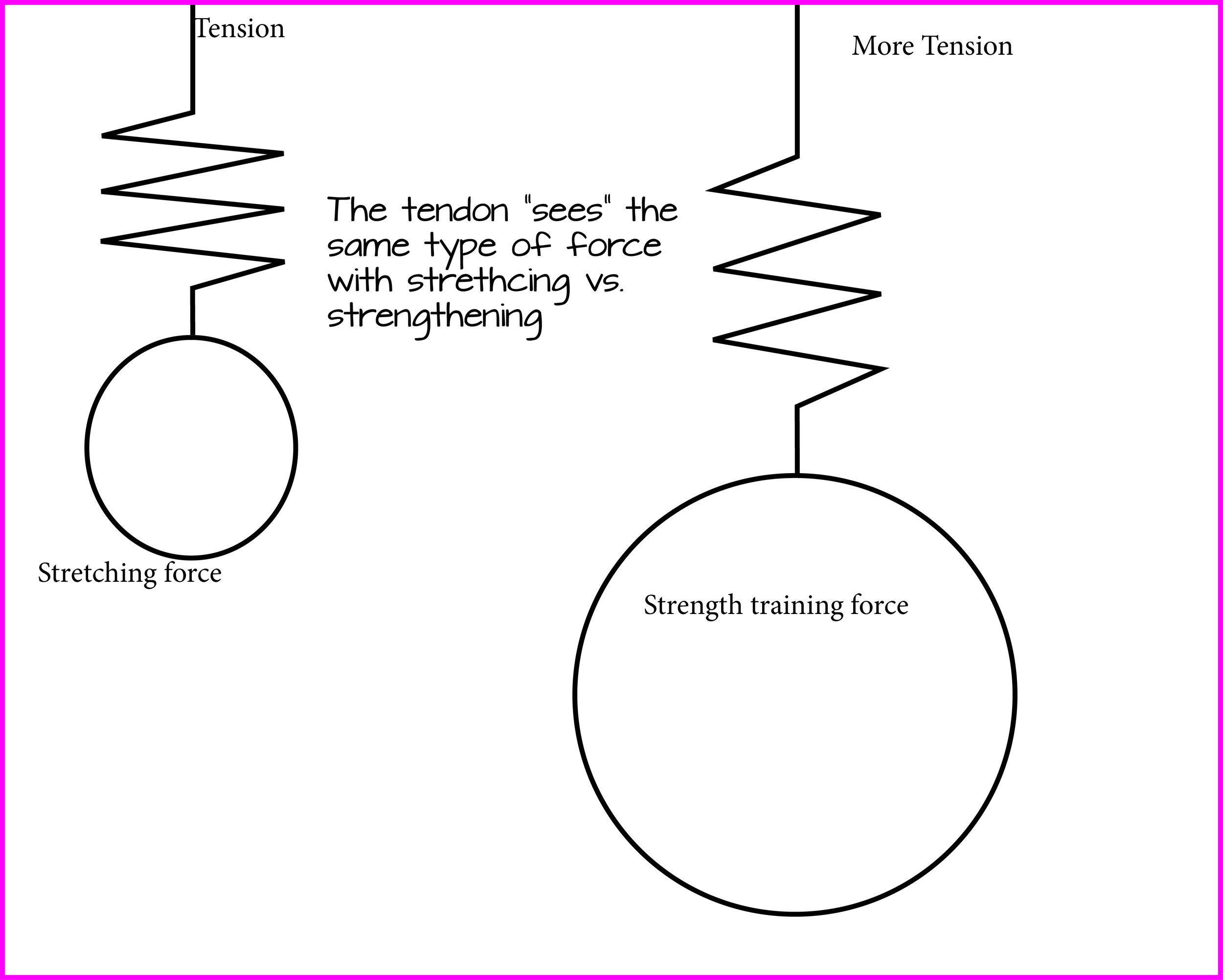 The type of load on the tendon is the same and responds similarly. Its the amount of load that is different