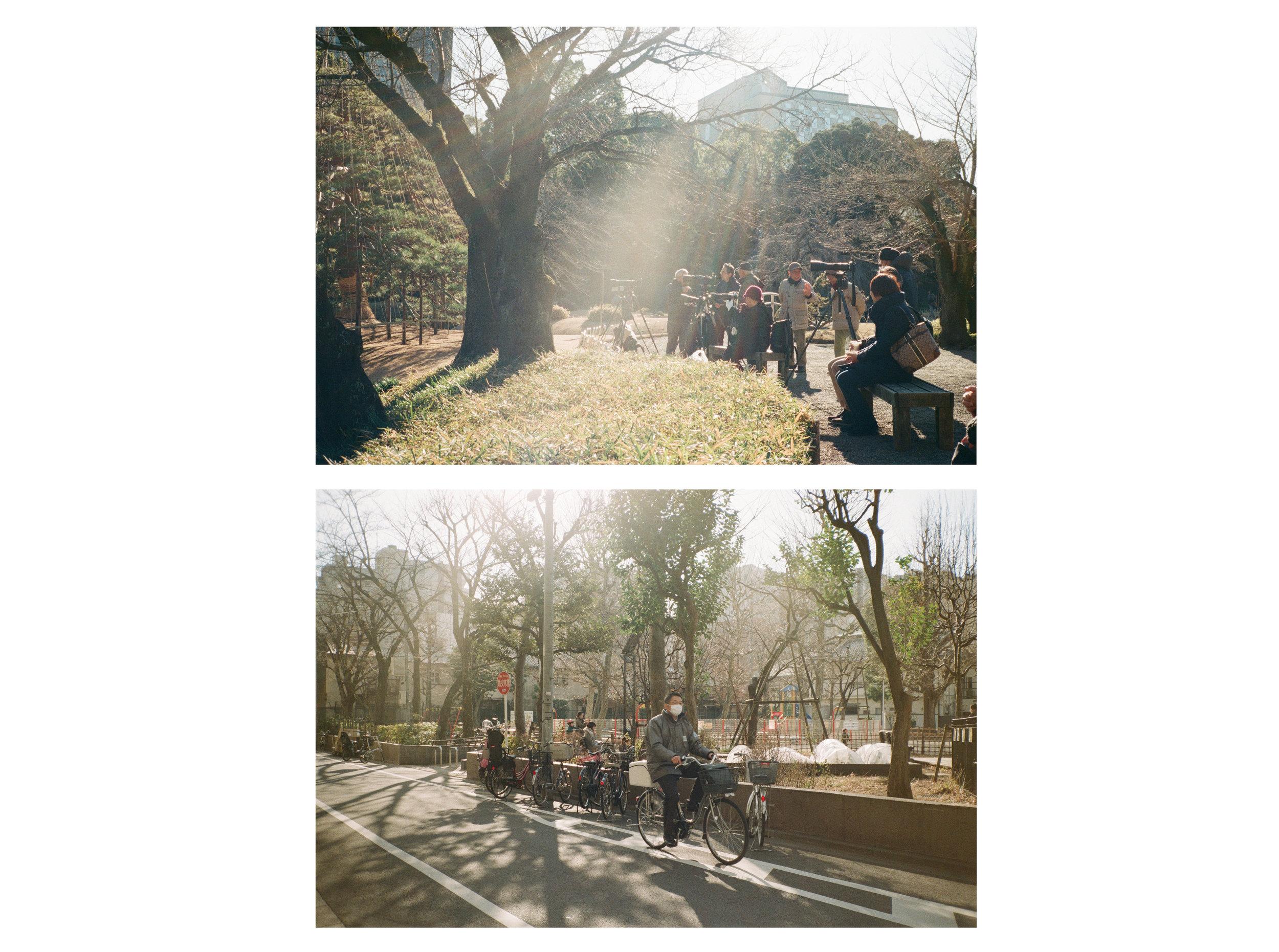 Japan website 2.jpg