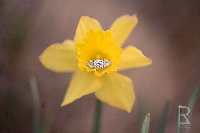 Excited for today's engagement shoot!  #engaged #engaged💍 #engagementring #engagementringgoals #diamonds #daffodils #diamondsanddaffodils #daffodil #daffodilseason #diamondring #diamond #loveandmarriage #ringlove #ringsofinstagram #engagementringideas