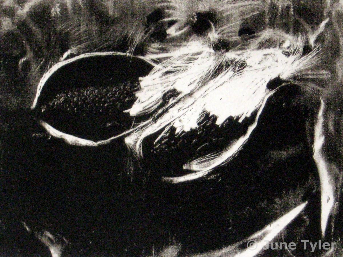 """Milkweed Pods"" 7"" x 5"" Image size Solar print"