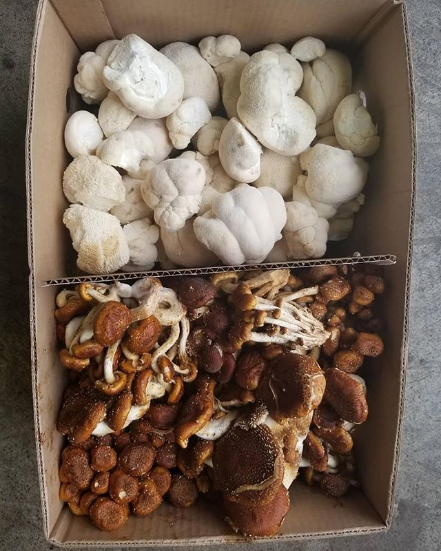 Lions Mane and chestnut mushrooms. Very limited - very awesome, very tasty. Text me!